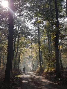 fietsers in de loenense bossen