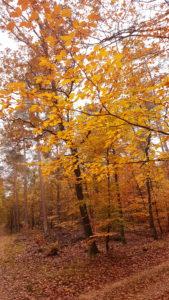 herfst in de Loenense Bossen (1)