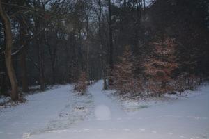 Bospad in sneeuw